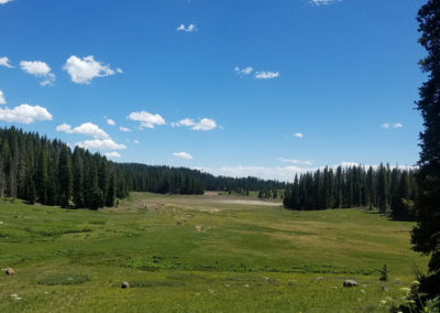 Colorado-Meadow-Blue-Sky