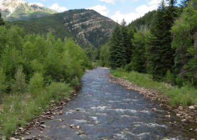 babbling colorado stream in the mountains lined with pine trees