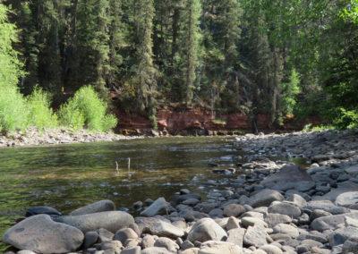 Delores, Colorado stream in the pines