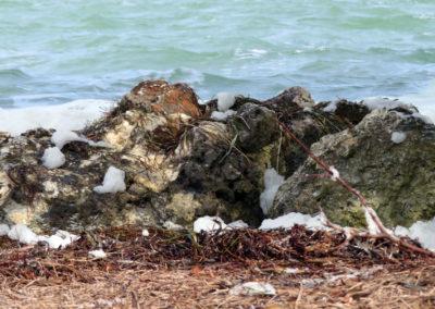 ocean foam on shore rocks